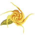 china-rose-wellness-logo-rose